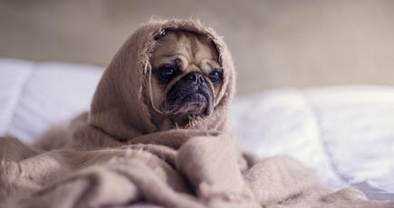 В Німеччині визнали похмілля хворобою
